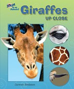 "<h2><a href=""../Giraffes_Up_Close/3876"">Giraffes Up Close</a></h2>"