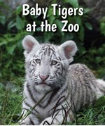 "<h2><a href=""../Baby_Tigers_at_the_Zoo/419176"">Baby Tigers at the Zoo: <i></i></a></h2>"
