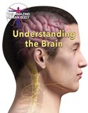Understanding the Brain
