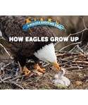 How Eagles Grow Up