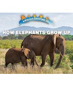 "<h2><a href=""../How_Elephants_Grow_Up/421822"">How Elephants Grow Up: <i></i></a></h2>"