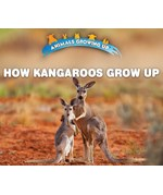 "<h2><a href=""../How_Kangaroos_Grow_Up/421823"">How Kangaroos Grow Up: <i></i></a></h2>"