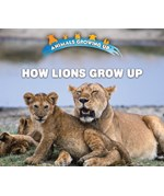 "<h2><a href=""../How_Lions_Grow_Up/421824"">How Lions Grow Up: <i></i></a></h2>"