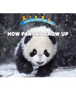"<h2><a href=""../How_Pandas_Grow_Up/421825"">How Pandas Grow Up: <i></i></a></h2>"