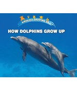 "<h2><a href=""https://www.enslow.com/books/How_Dolphins_Grow_Up/421983"">How Dolphins Grow Up: <i></i></a></h2>"