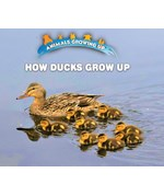 "<h2><a href=""https://www.enslow.com/books/How_Ducks_Grow_Up/421984"">How Ducks Grow Up: <i></i></a></h2>"