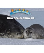"<h2><a href=""https://www.enslow.com/books/How_Seals_Grow_Up/421986"">How Seals Grow Up: <i></i></a></h2>"
