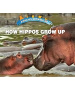 "<h2><a href=""../How_Hippos_Grow_Up/422110"">How Hippos Grow Up: <i></i></a></h2>"