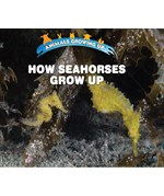 "<h2><a href=""../How_Seahorses_Grow_Up/422111"">How Seahorses Grow Up: <i></i></a></h2>"