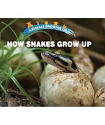 "<h2><a href=""../How_Snakes_Grow_Up/422113"">How Snakes Grow Up: <i></i></a></h2>"