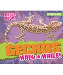 Geckos Walk on Walls!